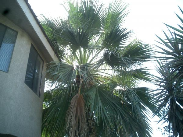 Palm &Yucca Trimmed