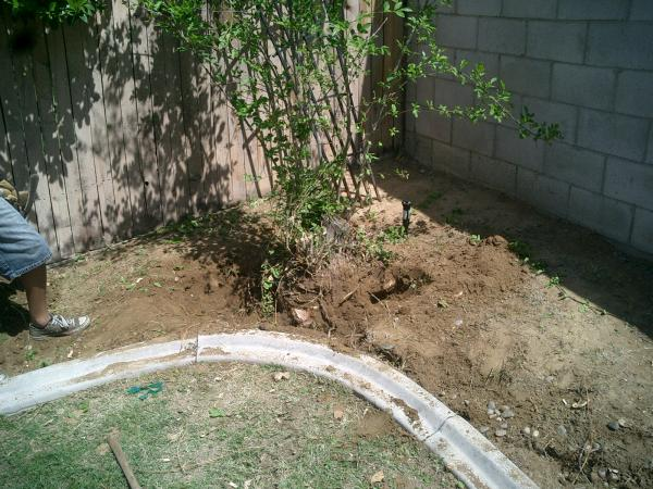 Bush stump removed and happy customer!