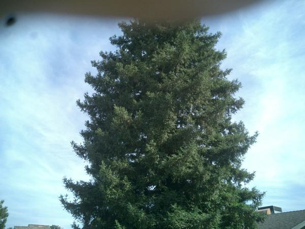 Big Red Wood Tree Trimmed Before & After