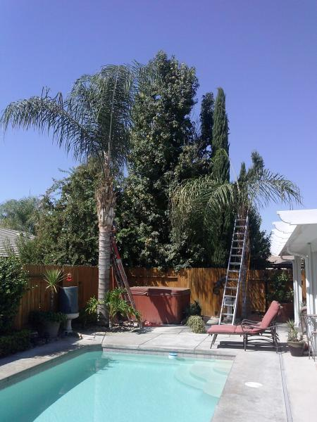 Queen Palms Before & After