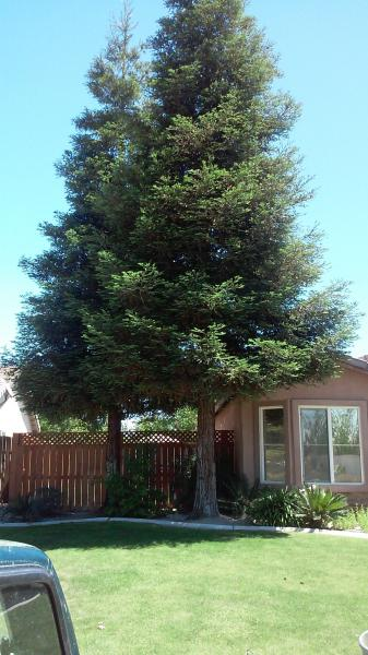 Redwood taken out to close to the House