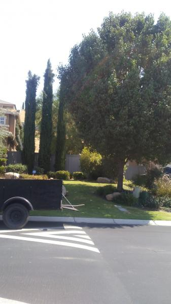 Large Flowering Pear & Cypress Before & After