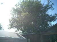 Magnolia & Persimmon Before & After