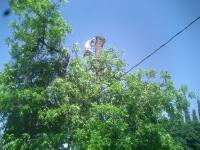 Pecan tree Cleared for power line