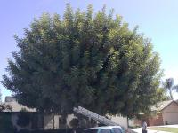 Carob Trimmed Before& After