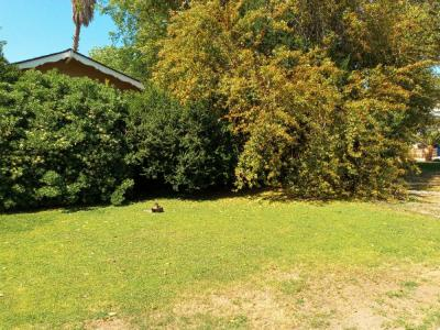 Trim all Bushes in front of House.